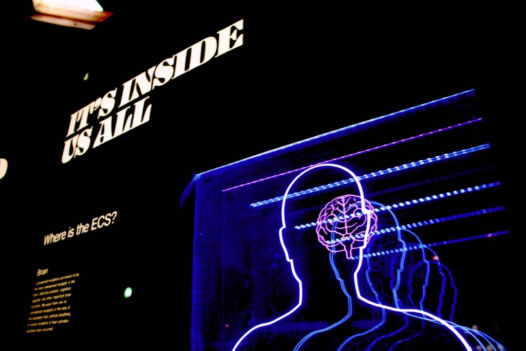 neon mozg czlowiek psychologia